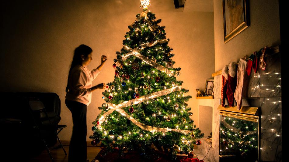 네덜란드에서 크리스마스 트리 구매, 대여하기