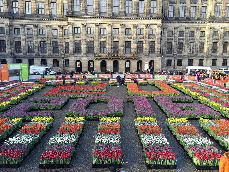 2018년 암스테르담 National Tulip Day에 아름다운 튤립 무료로 받기