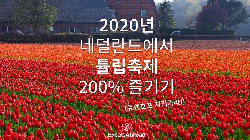 2020년 네덜란드에서 튤립축제 200% 즐기기 (큐켄호프 저리가라!)